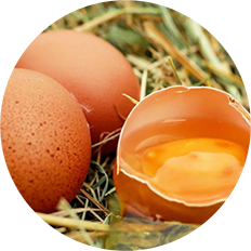鶏卵(イメージ)